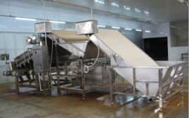 Shirimp Separator