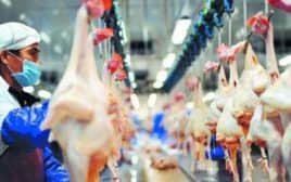 Línea de procesamiento de pollo